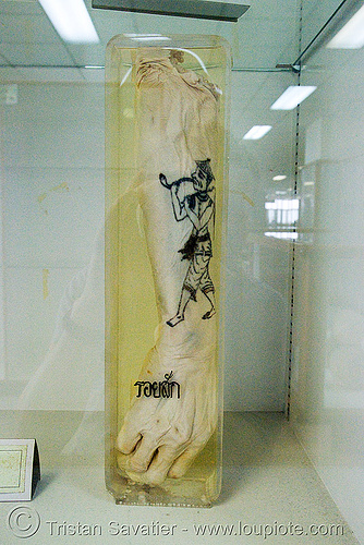 รอยสัก - severed arm with tattoo, preserved - forensic medicine museum, โรงพยาบาลศิริราช - siriraj hospital, bangkok (thailand), anatomy, arm, bangkok, body part, cadaver, corpse, dead, death, forensic medicine museum, human remains, siriraj hospital, specimen, tattooed, tattoos, thailand, บางกอก, รอยสัก, โรงพยาบาลศิริราช