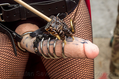 strap-on dildo with cock rings, bondage, cock rings, crocodile foot, dildo harness, fetish, fishnet stockings, folsom street fair, leather, sex toy, strap on, tights, woman